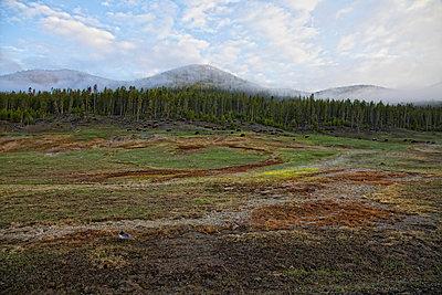 Bisonherde an einem Berghang im Yellowstone - p1278m2204262 von Rüdiger J. Vogel