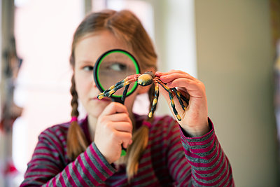Girl examining fake spider with magnifying glass - p300m1586948 by Robijn Page