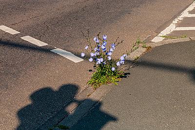 Straße - p417m1584125 von Pat Meise