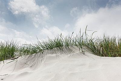 Sanddüne mit Gras - p248m1462786 von BY