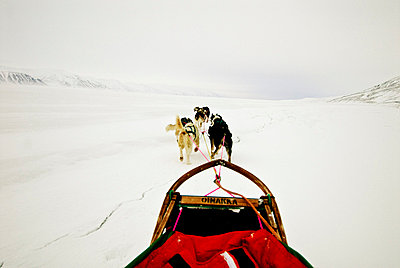 Dogs pulling sled in snow - p8475052 by Henrik Witt