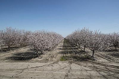 Almond farming - p1134m1440761 by Pia Grimbühler