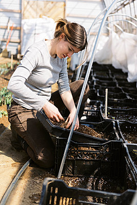 A young female farmer checking her bulb flowers in the greenhouse - p1166m2269685 by Cavan Images