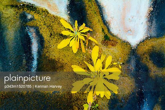 p343m1520785 von Kennan Harvey