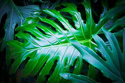 Blätter exotischer Pflanze - p1149m1582834 von Yvonne Röder