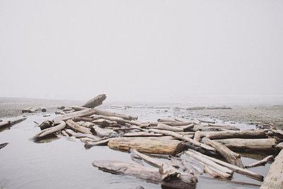 Olympic Peninsula - p1223m1044561 by stefanie-hoepner