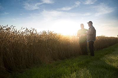 Caucasian men talking near field of wheat - p555m1522996 by John Fedele