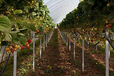 Farm - p5910118 by Celine Marchbank