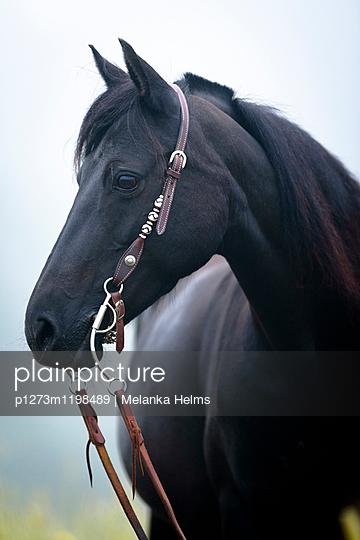 Portrait Westernpferd - p1273m1198489 von melanka
