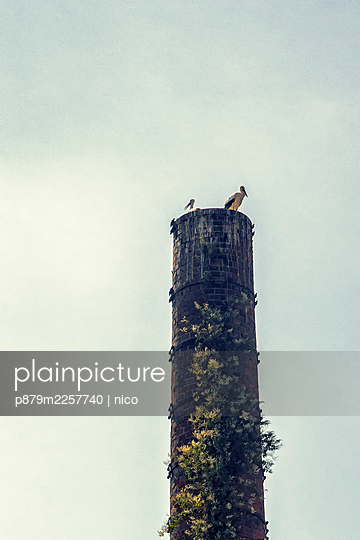 Storks on a factory chimney - p879m2257740 by nico