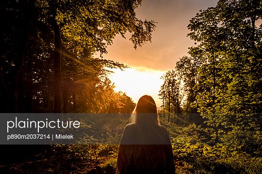 Abend im Wald - p890m2037214 von Mielek