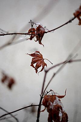 Last Autumn Leaf - p1307m1225130 by Agnès Deschamps