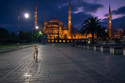Ein einsamer Hund auf dem Platz vor der Blauen Moschee in Istanbul - p1400m1573064 von Bastian Fischer