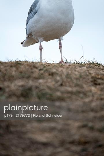 Feet of seagull, close-up - p179m2179772 by Roland Schneider