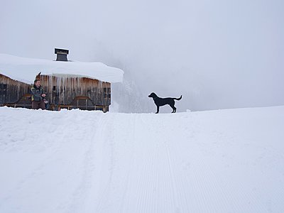Dog on snow-covered landscape, Flaine, France - p429m1047006f by Mark John
