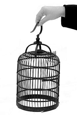 Vogelkäfig - p450m793106 von Hanka Steidle