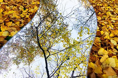 Spiegelung der Natur - p728m1193638 von Peter Nitsch