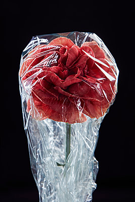Red peony under plastic - p1540m2185309 by Marie Tercafs