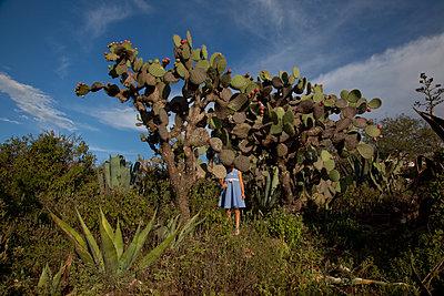 Behind Cactus - p1636m2216349 by Raina Anderson