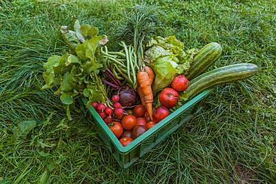 Harvested mixed vegetables and apples in a box - p300m1550063 by Tom Chance