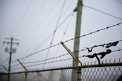 Scraps of fabric caught on a barbed wire fence - p4429440f by Design Pics