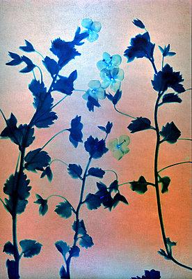 Dried flowers - p945m2279000 by aurelia frey