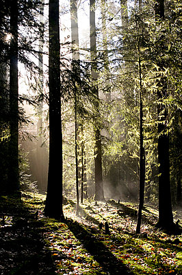 Nebel im Wald - p3050179 von Dirk Morla