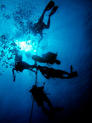 Hawaii, Big Island, Kohala Coast, Scuba Divers On Line. - p442m934981 by Peter French