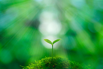 Seedling - p5143131f by GYRO PHOTOGRAPHY