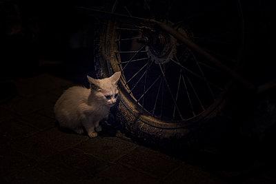 Kitten near a wheel in the dark - p1007m2092401 by Tilby Vattard