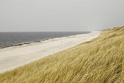 Beach - p248m952347 by BY