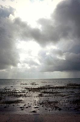 Dramatische Landschaft an der Nordsee - p382m2053119 von Anna Matzen
