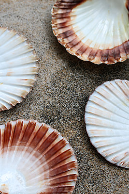 Shells - p450m1586577 by Hanka Steidle