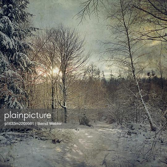 Winter Sun - p1633m2209981 by Bernd Webler