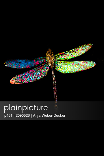 p451m2090528 by Anja Weber-Decker