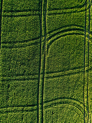 Aerial view of lush agricultural field during sunny day - p1166m2025354 by Cavan Images