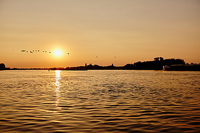 Flock of birds at sunset - p1573m2178922 by Christian Bendel
