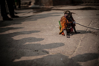 Monkey and leash on the floor surrounded by people shadows - p1007m1144404 by Tilby Vattard