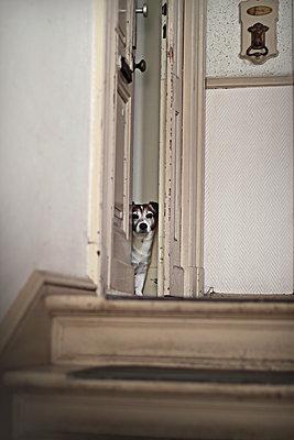 Hund in der Tür - p1247m1083275 von Hannes S. Altmann