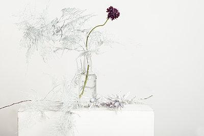 blooms - p1323m1510701 von Sarah Toure