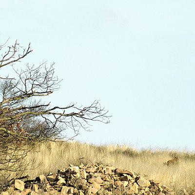 Vertrocknete Landschaft - p2685397 von icon art