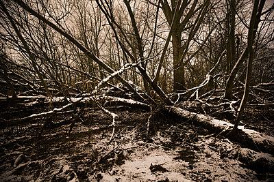 Bäume am Moorfleter Hauptdeich - p979m1546061 von Fred Dott