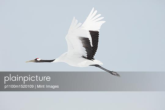 p1100m1520109 von Mint Images