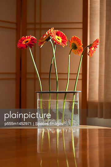 Gerbera Daisies on a Kitchen Table - p555m1452971 by Spaces Images