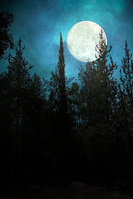 Moon Against Pine Trees  - p1248m2044080 by miguel sobreira