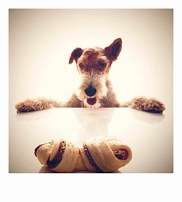 Dog eat dog - p5870226 von Spitta + Hellwig