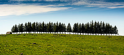 Firs row on a hill. Auvergne. France. - p813m1039469 by B.Jaubert