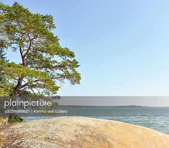 Kiefer auf Insel - p322m989621 von Kimmo von Lüders