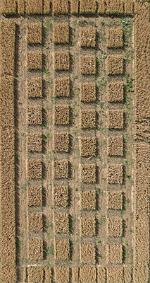 Full frame aerial view of crops in agricultural landscape, Stuttgart, Baden-Wuerttemberg, Germany - p301m1406290 by Stephan Zirwes