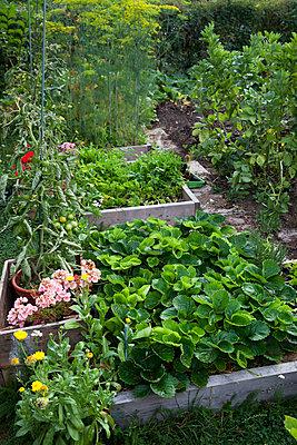 Vegetable patch - p312m996552f by Lena Granefelt